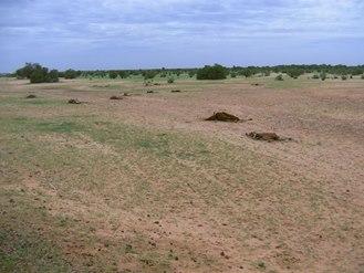 صورة من عدد من المواشي قضا عليها الجفاف بلبراكنة